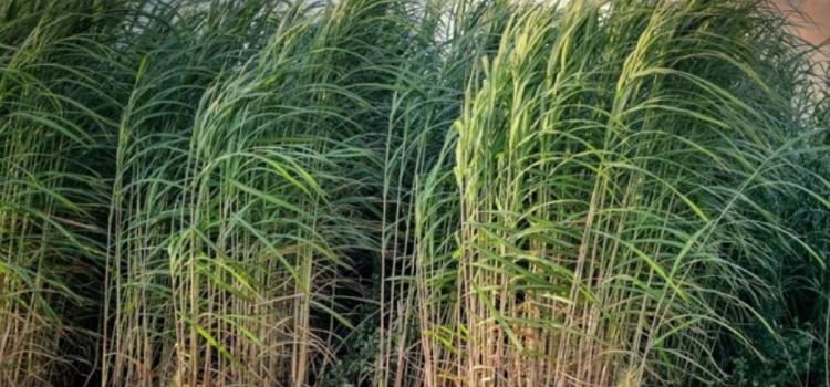 Brasil lidera produção de biocombustíveis