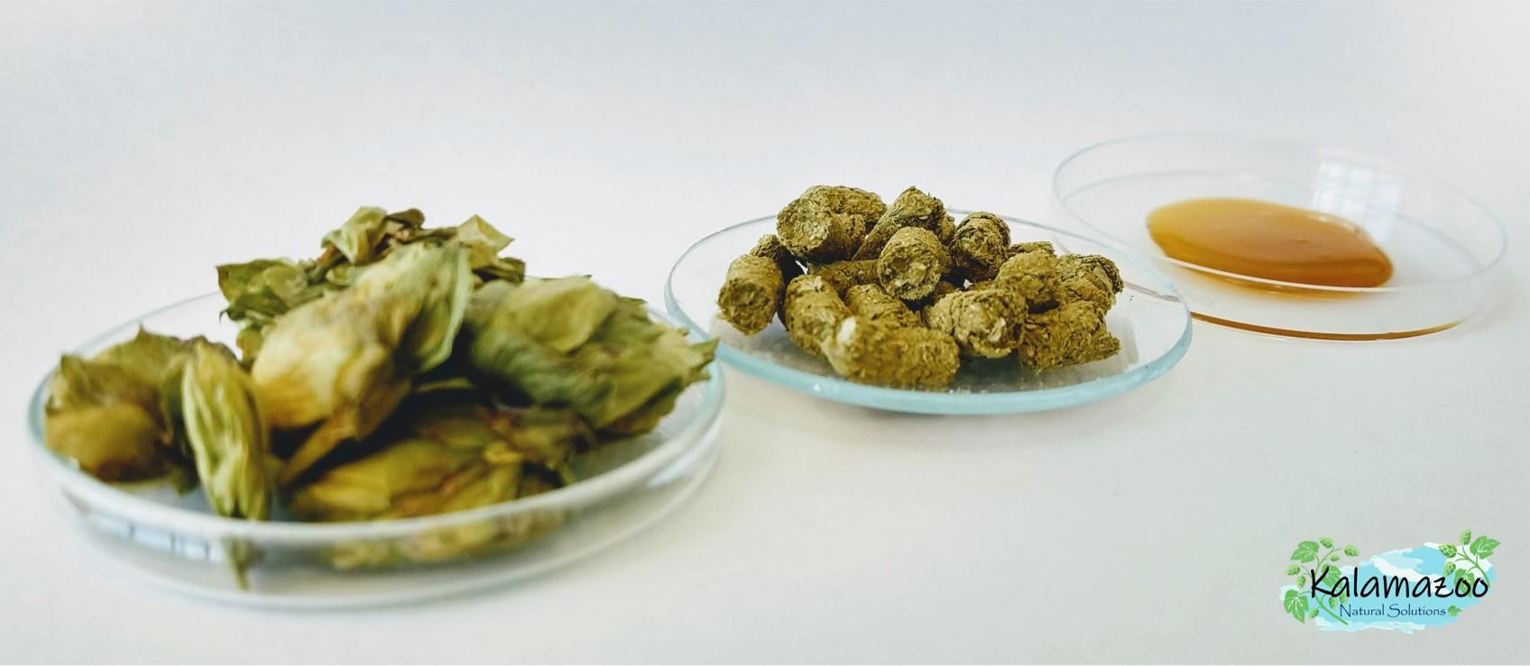 Da esquerda para a direita - lúpulo em flor, lúpulo em pellets e extrato de lúpulo em desenvolvimento pela Kalamazoo.